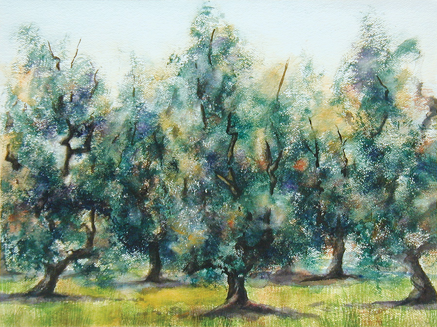 Tuscan Olive Grove, Watercolor on Paper